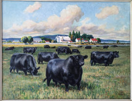 Black Angus Grazing
