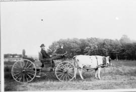 Ox pulling Arthur Thompson on a wagon