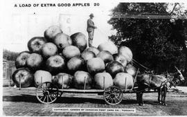 A Load of Extra Good Apples