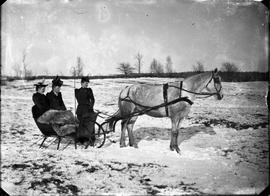 three women in a horse-drawn sled on the snow