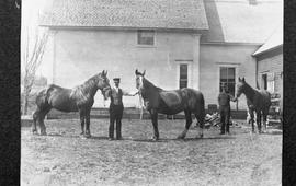 Wallaces showing horses