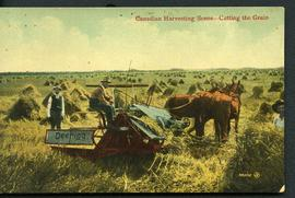 Canadian Harvesting Scene Cutting the Grain